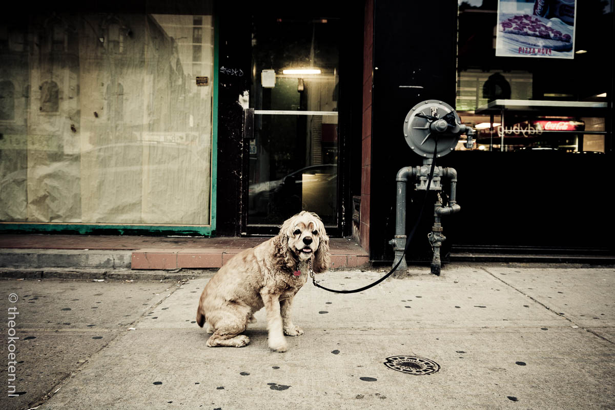 Canada, Toronto, dog