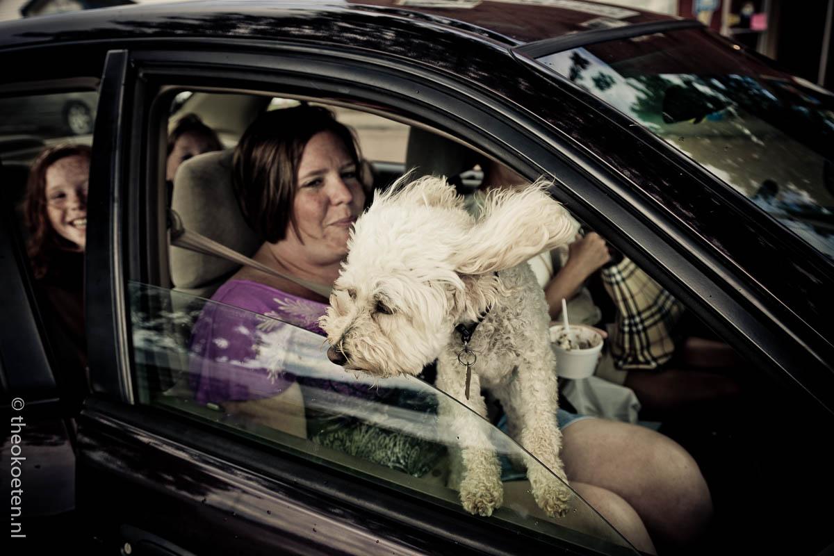 dog, Nova Scotia, pugwash, village